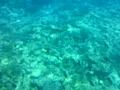 動画:水中遊覧